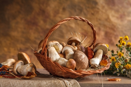 beauteous: Mushrooms still life - studio photography of wicker basket with edible mushrooms