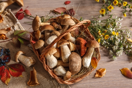 beauteous: Wonderful colors of autumn - studio photography of beautiful autumn leaves and mushrooms in wicker basket