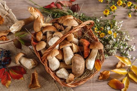 beauteous: Still life  Flowers, mushrooms - studio photography of eatable mushrooms in wicker basket