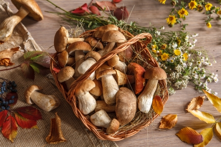 beauteous: Autumn still-life with full basket of mushrooms - studio photography of gustable mushrooms in a wicker basket Stock Photo