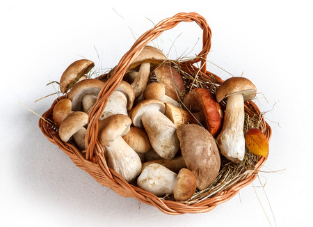 beauteous: Mushrooms in basket - studio photography of gustable edulis - on white background