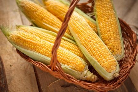 elote: Espiga de trigo, revelando granos amarillos - foto de maíz en una canasta de mimbre Foto de archivo
