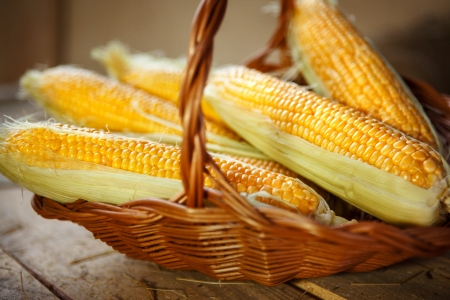 shuck: Maize husked - photography of ear of maize in a wicker basket