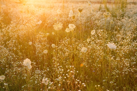 thrive: Summer wildflower meadow - outdoors photography of  wildflowers and green grass