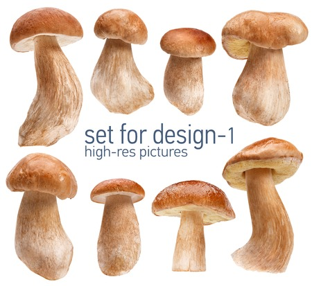 comestible: Beautiful mushrooms - gustable edulis isolated on white background with set for design Stock Photo