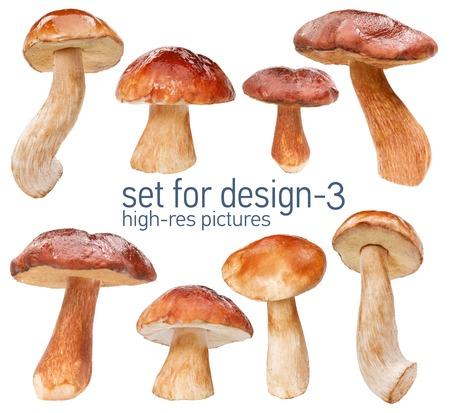 edulis: Orange cap boletus - gustable edulis isolated on white background with set for design