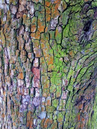 Bark of tree - outdoors photography of tree bark texture