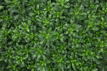 greenness: Greenness background