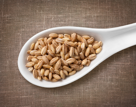 pearl barley: Pearl barley in white porcelain spoon  high-res photo of grain in white porcelain spoon on burlap sackcloth background Stock Photo