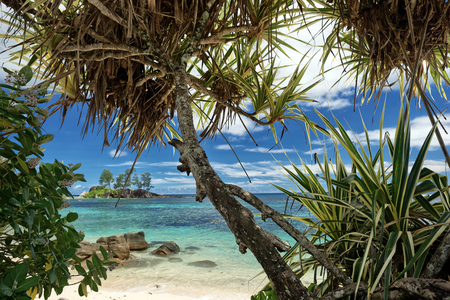 trees photography: Tropical beach with palm trees  outdoors photography of picturesque Seychelle islands