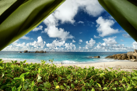 cerulean: Green vegetation, with a sea view outdoors photography of picturesque Seychelle islands