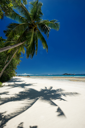 coconut trees: Coconut palm with shadow on sandy beach outdoors photography of picturesque Seychelle islands