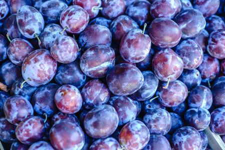 beauteous: Blue plum fruits Ripe Plums Background close-up. Selective focus.