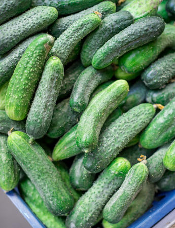 beauteous: Pile of fresh green cucumbers, close-up. Selective focus.