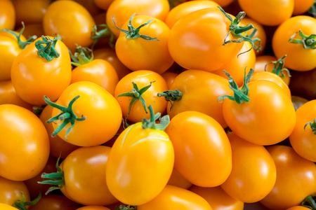 beauteous: Yellow tomatoes. Fresh multicolored tomatoes at local farm market .yellow tomatoes background, close-up. Selective focus.