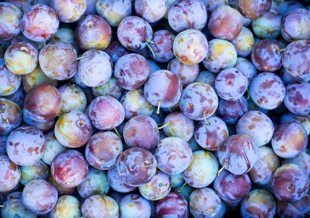 beauteous: Indigo-color plum fruits, Ripe Plums Background, close-up. Selective focus.