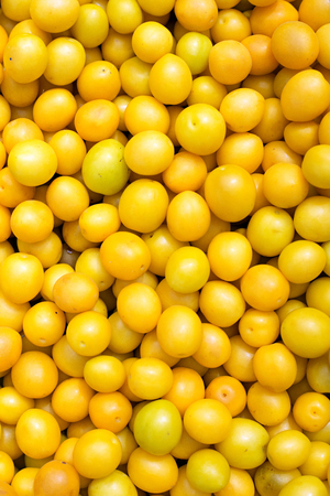 alycha: Yellow cherry plums background, close-up. Selective focus. high resolution product. Stock Photo
