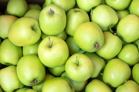 beauteous: Apples harvesting time, photography of green apples, close-up. Selective focus