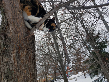 beautiful black and red cat sits on a tree and jumps down in winter