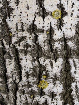 Very beautiful tree bark texture with moss and mold