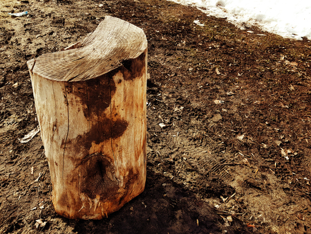 A beautiful old stump or cut from a tree amid melting snow and earth in spring or winter