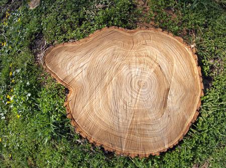 arbre vue dessus: Destruction des arbres pour les besoins de l'humanité conduit à la catastrophe environnementale