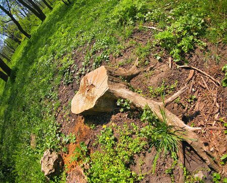 Stump of the cut tree on the edge of the forest with wide angle view photo