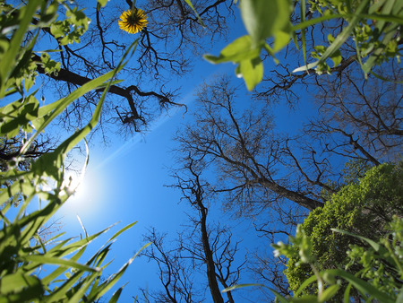 ''wide angle'': Spring sky with wide angle fisheye lens view from below