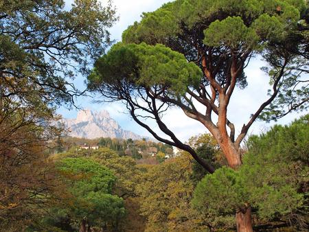 Crimea Vorontsov Park views of Mount AiPetri photo