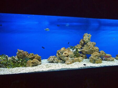 white stones: Large and long aquarium with sea water blue, small fish and white stones on the bottom