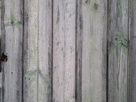 mangy: Fragment of an old wooden fence with the remains of green paint on the mangy dark boards with cracks for use as background or wallpaper Stock Photo