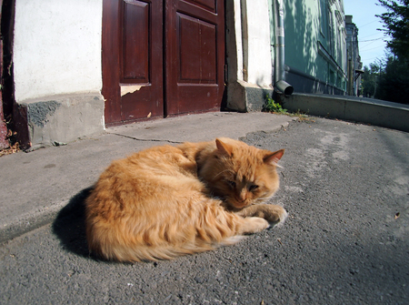 waif: Wide angle view from the perspective distortion on the lonely and homeless cat on the street. Red homeless cat lying on the asphalt in the middle of the sidewalk. Stock Photo