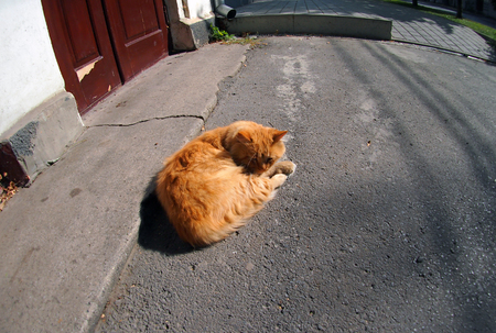 waif: Wide angle view from the perspective distortion on the homeless cat on a lonely street. Red homeless cat lying on the asphalt in the middle of the sidewalk.