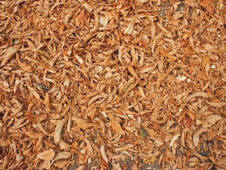 The surface of the ground in the park, completely covered with fallen leaves of chestnut brown color to use as a background.