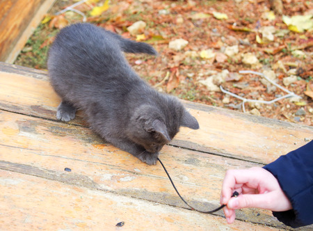 waif: Homeless kitten playing with a stick on a wooden platform. Selective focus with shallow depth of field.