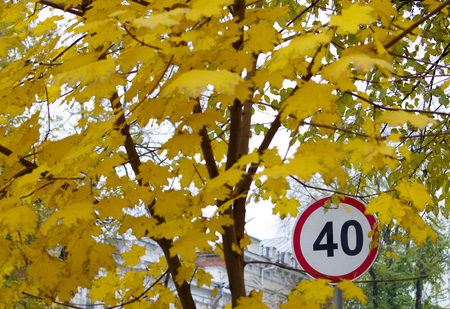 city limit: Road speed limit sign on a city street near the maple tree with yellow autumn leaves. Selective focus with blurred foreground. Stock Photo