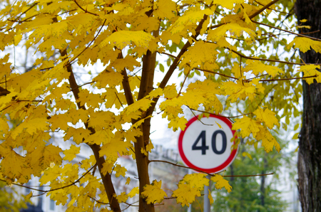 city limit: Blurred and out of focus image of a maple with yellow autumn leaves in the background Road speed limit sign on a city street for use as a background. Stock Photo