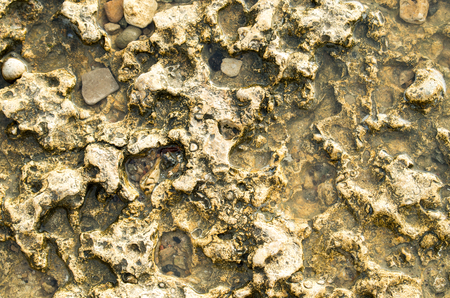 deepening: Top view of the natural background closeup of yellow limestone with a rough surface at the seaside