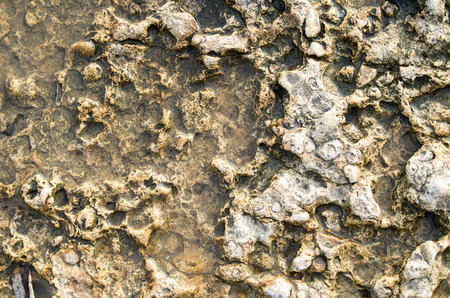 deepening: Overhead view at the fragment of natural background closeup of yellow limestone with a rough surface at the seaside