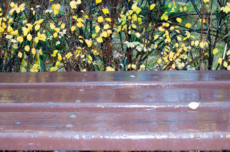 wetness: Wooden bench out of focus close-up with puddles after a rain on a background of autumn bushes Stock Photo