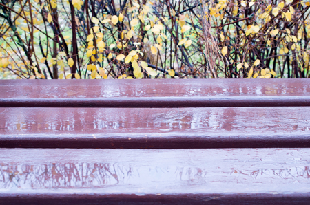 dank: Wooden bench close-up with puddles after a rain on a background of autumn bushes out of focus Stock Photo