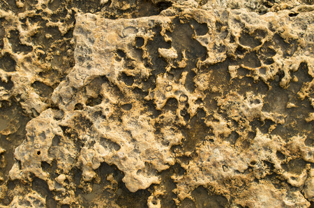 deepening: Natural background of yellow limestone with the bumpy surface with dark hollows that are smoothed by the sea waves.