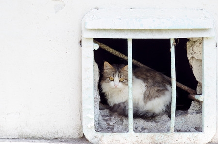 Homeless cat from the window of the basement observes the street Stock Photo