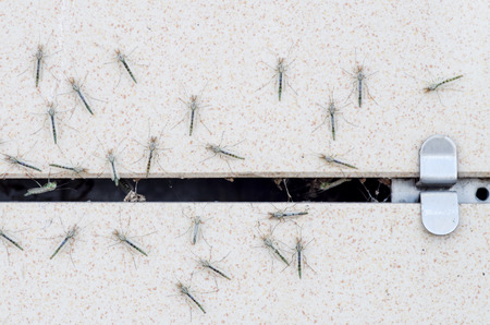 A flock of insects close-up on the wall of a house