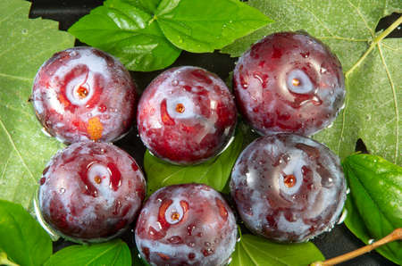 Top view of several purple plums close-up in water for washing. Stock Photo