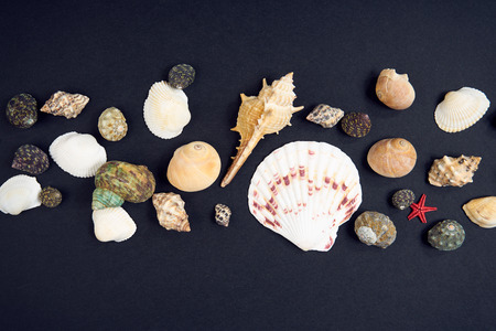 Seashells on a black background Stock Photo