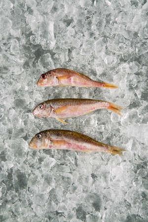 sea food fish on ice Reklamní fotografie
