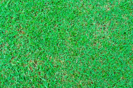 greensward: greensward
