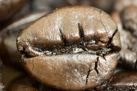 coffea: coffee beans to each day