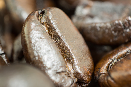 coffea: macro coffee bean